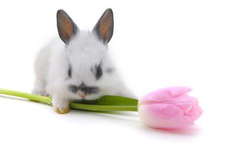 lapin blanc: petit lapin avec fleur isol� sur fond blanc Banque d'images