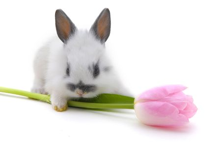 small rabbit with flower isolated on white background Stock Photo