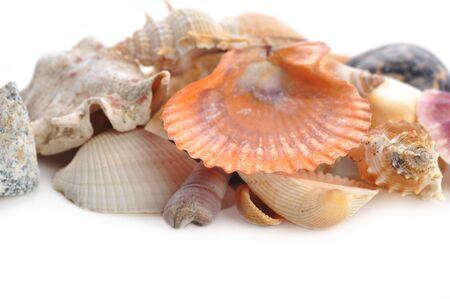 cockleshells: Multi-coloured sea cockleshells and starfish