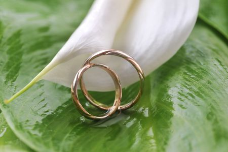 wedding photography: white  calla lily and wedding rings on green leaves close up
