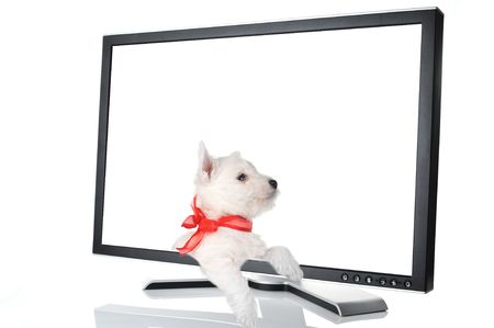 cute puppy in black monitor on white background Stock Photo - 6027772