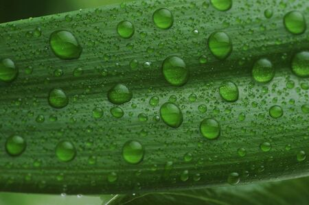 bright green leaf and water drop  close up Stock Photo - 6051420