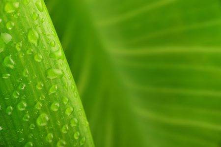 green leaf and water drop close up Stock Photo - 6238649