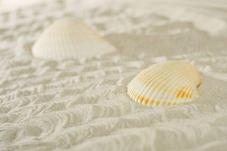 cockleshells: cockleshells on sea sand background Stock Photo