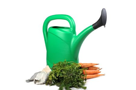 Bunch of fresh carrots and green watering can isolated photo