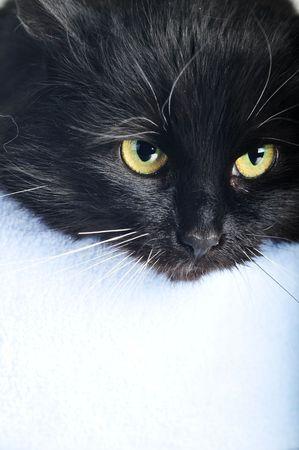and lies:  black cat lies on  pillow portrait