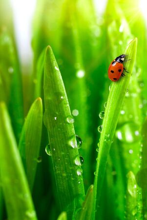 fresh green grass with water drops close up Stock Photo