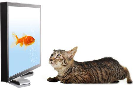 Cat looking at fish on display photo