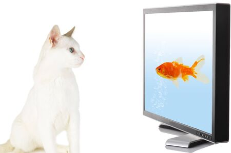 Cat looking at fish on display photo