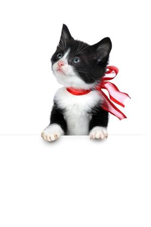 small cute kitten isolated on white Stock Photo - 6956392