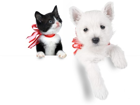 cute puppy and cat isolated on white Stock Photo - 6956754