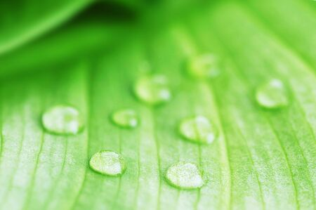 bright green leaf and water drop  close up Stock Photo - 6957054