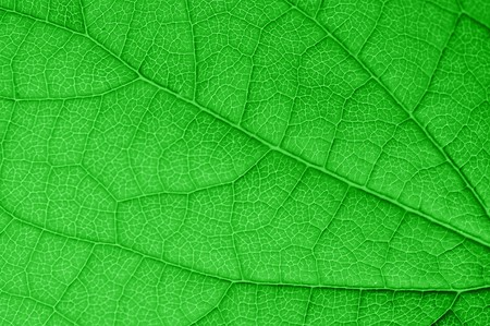 green leaf very close up Stock Photo - 7128709