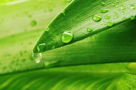 green leaf and water drop close up Stock Photo - 7128560