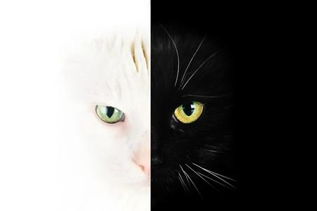 Close up portrait of  black cat photo