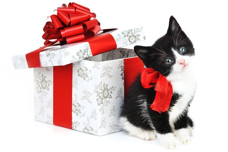 small cute kitten near gift box  Stock Photo - 7478713