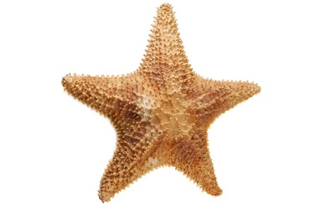 salt water fish: sea starfish isolated on white Stock Photo