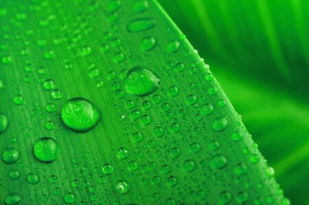 green leaf and water drop close up Stock Photo - 7683301
