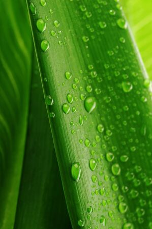 green leaf and water drop close up Stock Photo - 7683329