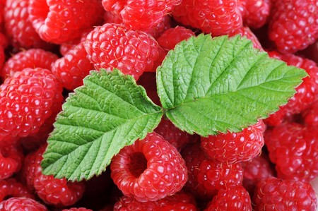 Ripe red raspberries with green leaves close up photo