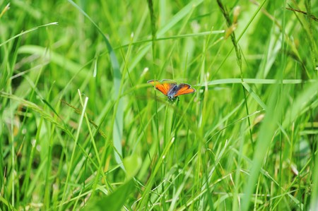 small red butterfly sitting on a green grass photo