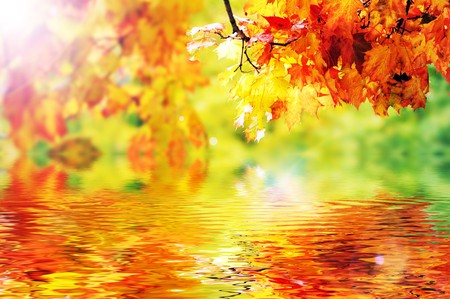 beautiful colorful autumn  leaves in the park Stock Photo - 7720519