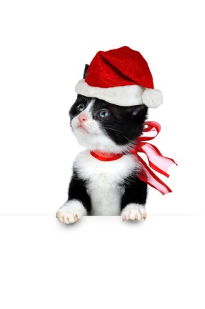small cute kitten isolated on white Stock Photo - 7720323