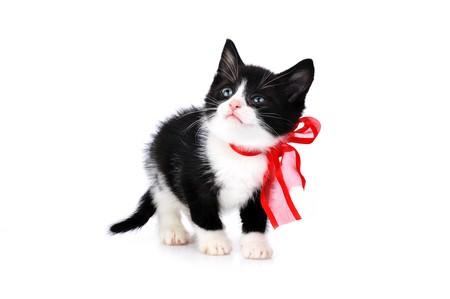 beautiful small kitten isolated on white Stock Photo - 7778072