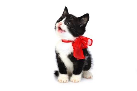 beautiful small kitten isolated on white Stock Photo - 7936222