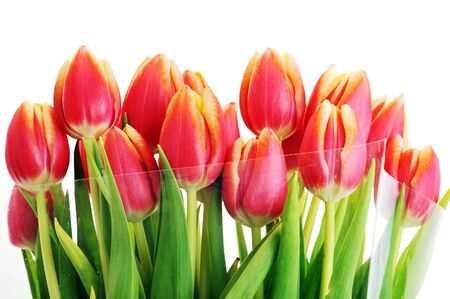 bouquet of many red tulips Stock Photo - 7936269