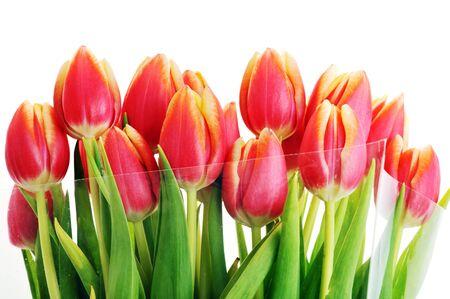 flores de cumpleaños: ramo de tulipanes rojos muchos