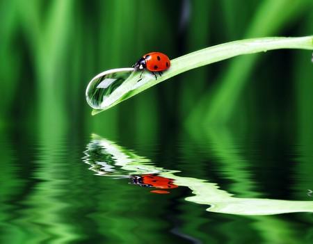 草の上の水滴をクローズ アップ