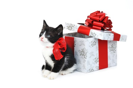 small cute kitten near gift box photo