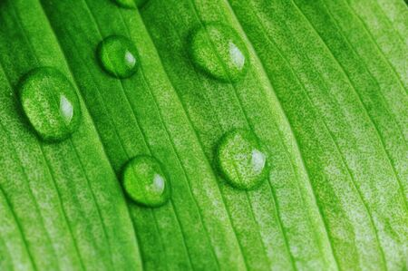 green leaf with water drops close up Stock Photo - 8178481