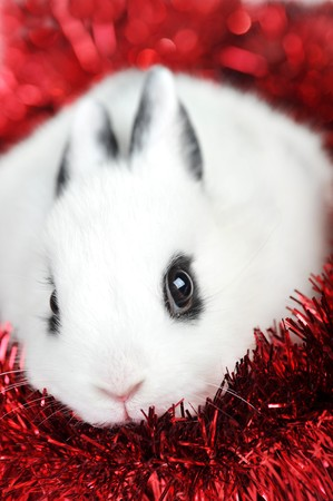 Small beautiful rabbit with  red  garland  isolated photo