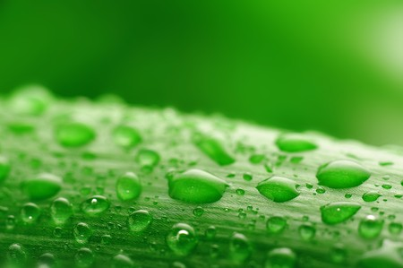 fresh green plant leaf with water drops close up photo