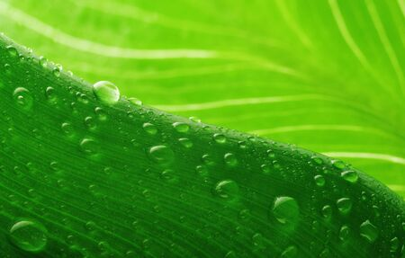 green leaf and water drop close up Stock Photo - 8282856