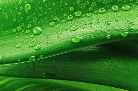 green leaf and water drop close up Stock Photo - 8282885