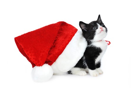 cute kitten with red santas hat photo