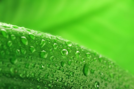 green leaf and water drop close up Stock Photo - 8282825