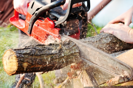 chainsaw blade cutting log of wood Stock Photo - 8371967