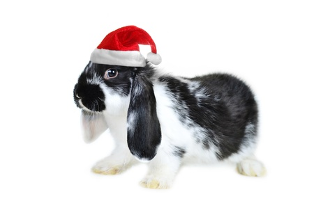 Small beautiful rabbit  on  white background Stock Photo - 8371871