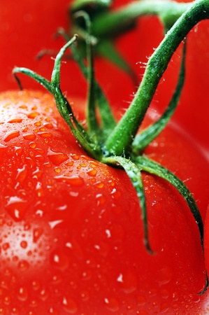 fresh tomato with water drops close up photo
