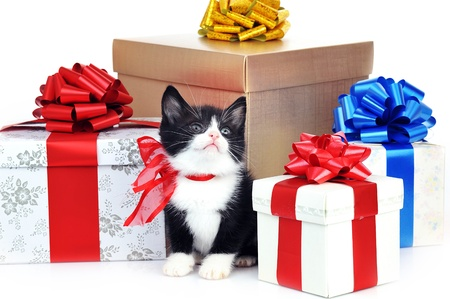 kitten small white: small cute kitten near gift boxes