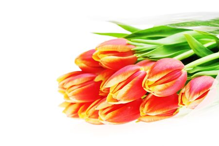 bouquet of many red tulips