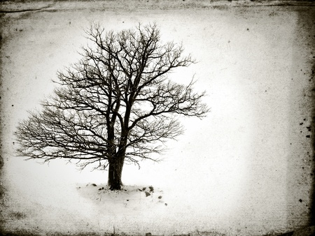 frozen trees: lone tree without leaves  in winter