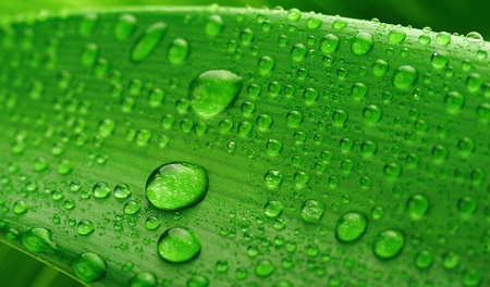 green leaf and water drop close up Stock Photo - 8824484