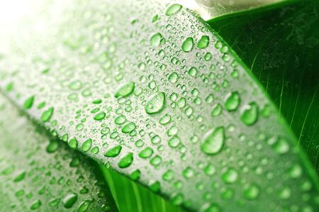 green leaf and water drop close up Stock Photo - 8824258