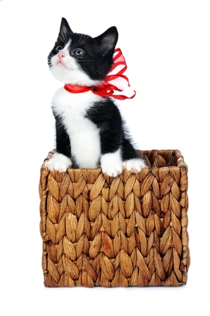 small cute kitten in gift box photo