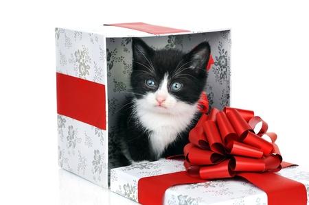 small cute kitten inside gift box Stock Photo